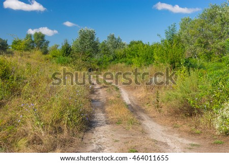 Summer landscape with an earth road in overgrown planting
