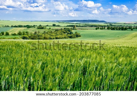 summer landscape with barley field  - stock photo