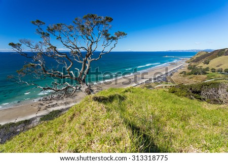 Summer Landscape with Blue Sky on the Pacific Sea Coast, Northland, North Island, New Zealand