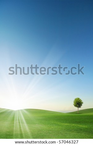 Summer landscape with bluey sky, green grass and trees - stock photo