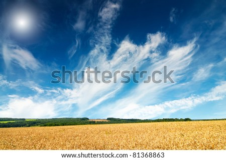 Summer landscape with cereals field and fun sun in the blue sky. - stock photo