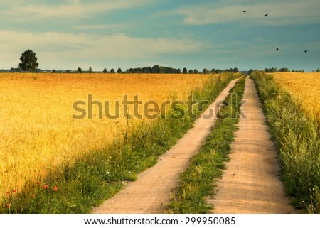 Summer landscape with country road and field of wheat, over which fly cranes. - stock photo