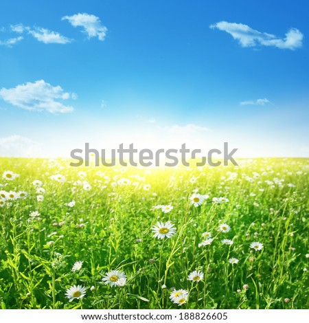 Summer landscape with daisy field, blue sky and sun. - stock photo
