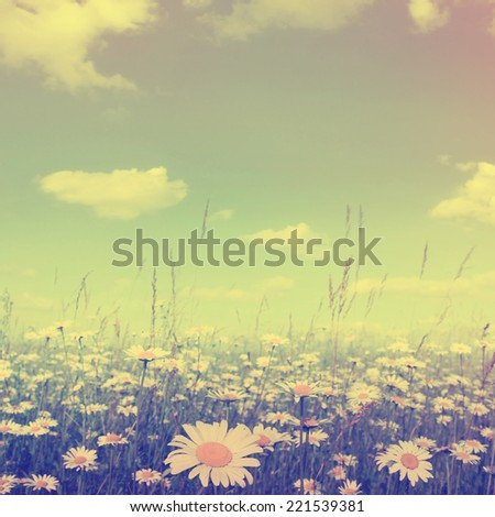 Summer landscape with daisy field in vintage  style. - stock photo
