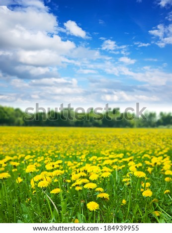 Summer landscape with dandelions meadow in sunny summer day