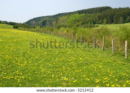 summer landscape with fence and dandelions in the grass - stock photo