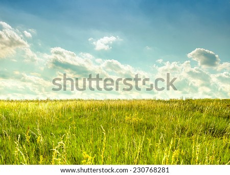 Summer landscape with field - stock photo