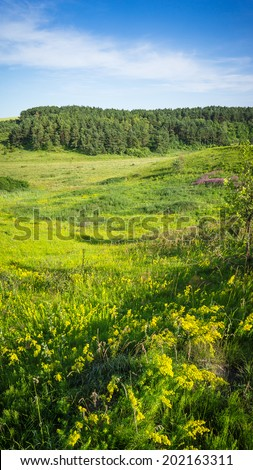 summer landscape with flowering meadows  - stock photo