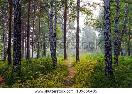 Summer landscape with fog - stock photo