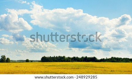summer landscape with forest, field, and blue sky - stock photo