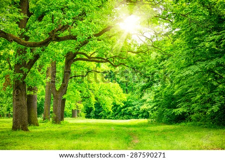 summer landscape with forest trees - stock photo
