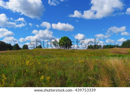 Summer landscape with grass, trees, sky and clouds - stock photo