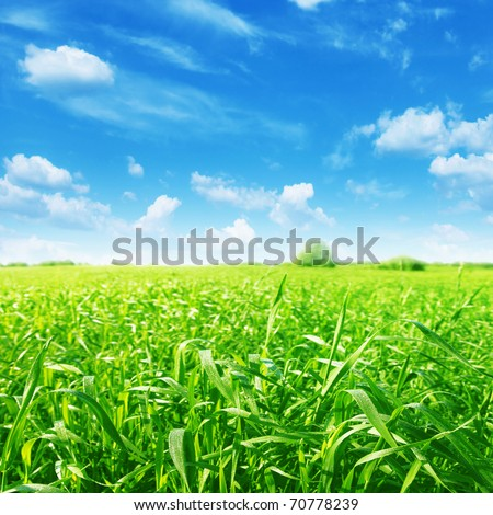 Summer landscape with green field and blue sky. - stock photo