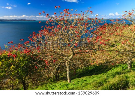 Summer Landscape with Green Field and Blue Sky on the Pacific Sea Coast, Duder Regional Park, Auckland Region, New Zealand - stock photo
