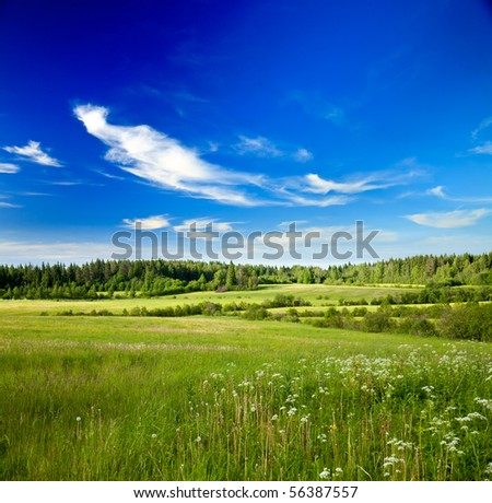 Summer landscape with green forest meadow and blue sky - stock photo