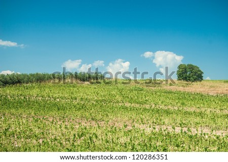 Summer landscape with green grass and clouds - stock photo