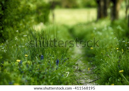Summer landscape with green grass, and small road to the meadow - stock photo
