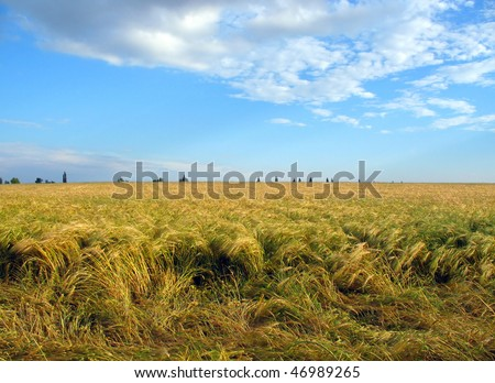 Summer landscape with green grass, wheat and blue sky