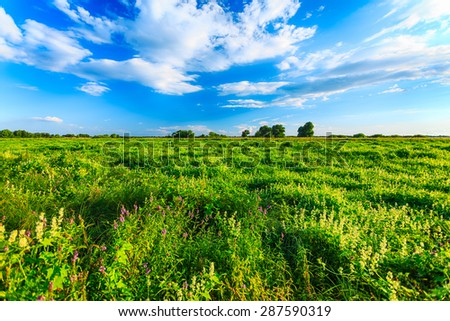 summer landscape with green meadow - stock photo