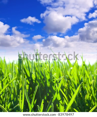 Summer landscape with green meadow under cloudy sky