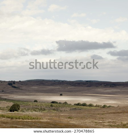 Summer landscape with herd and field.Special toned photo in vintage style - stock photo