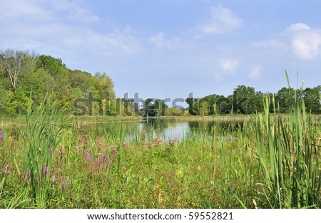 summer landscape with lake and blue sky