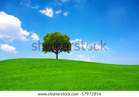 Summer landscape with lone tree - stock photo