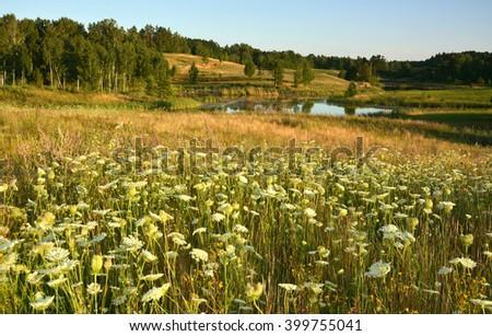 Summer landscape with meadows and flowers