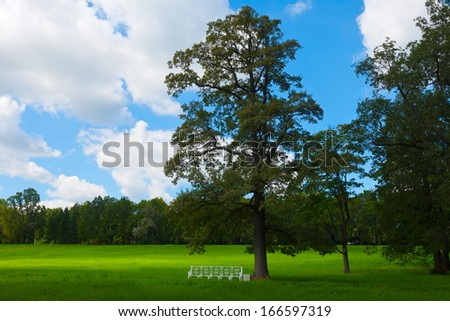 Summer landscape with oak and green lawn