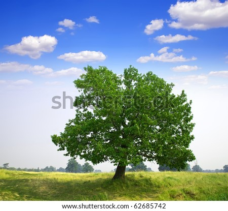 Summer landscape with oak  tree under cloudy sky - stock photo