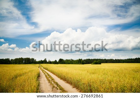 Summer Landscape with Oat Field and Emty Countryside Road on the Background of Beautiful Sky. Agriculture Concept. Toned Photo. Copy Space. - stock photo