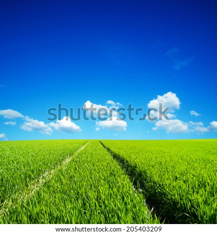 Summer landscape with rapeseed field and blue sky