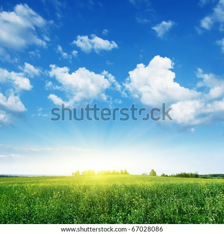 Summer landscape with rapeseed field,blue sky and sun. - stock photo