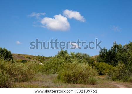 Summer landscape with road and green trees