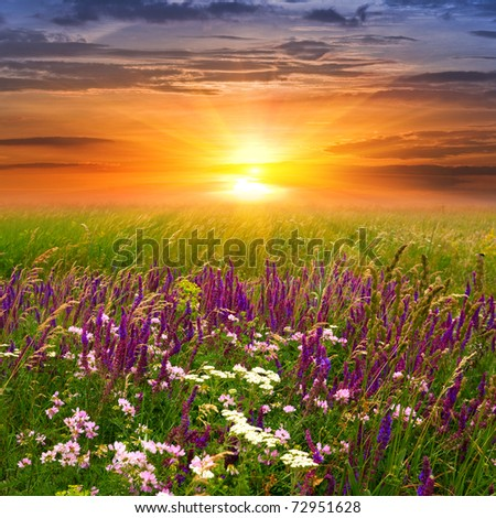 Summer landscape with sunset in steppe - stock photo