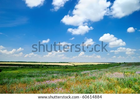 Summer landscape with the beautiful sky and fields