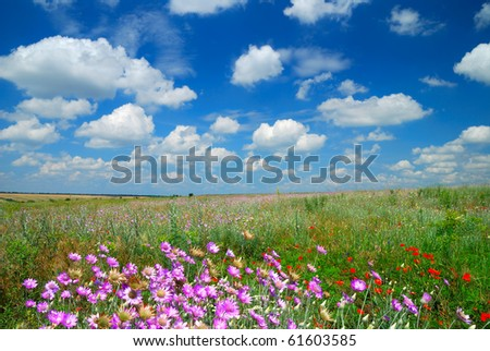 Summer landscape with the beautiful sky and fields - stock photo