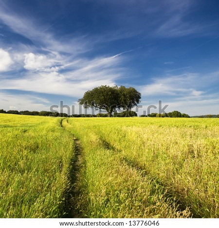 summer landscape with tree and path - stock photo