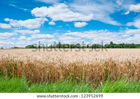 Summer Landscape with Wheat Field and Clouds in France - stock photo