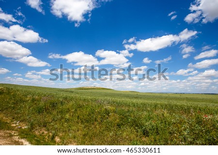 Summer Landscape with Wheat Field and Clouds / Spain / Europe