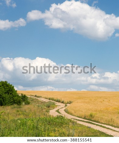 Summer landscape with wheat field and country road - stock photo