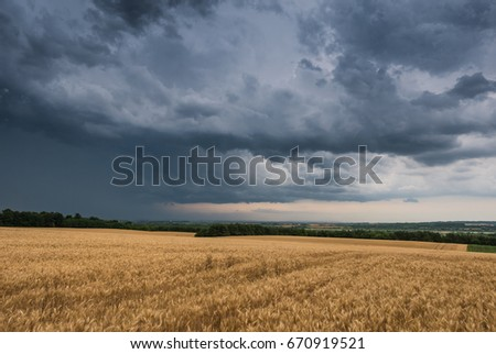 Summer Landscape with Wheat Field and stormy clouds
