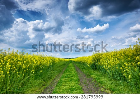 Summer landscape, yellow rapeseed field and road - stock photo