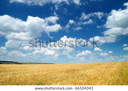 Summer landscape. Yellow wheat field and dark blue sky - stock photo
