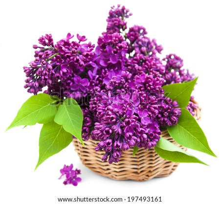 summer lilac flowers in basket on a white background - stock photo