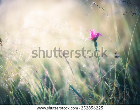 Summer meadow - stock photo