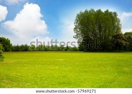 Summer meadow and tree - stock photo