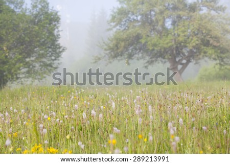 Summer meadow in foggy summer morning - stock photo