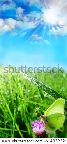summer meadow in the morning time - stock photo