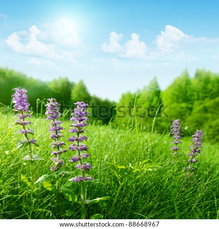 Summer meadow on a hill with bright blue sky. - stock photo